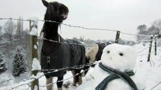 Horse and snowman