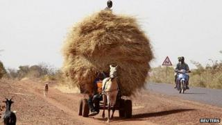 A donkey cart loaded with hay on the road heading to Sevare, 25 january 2013