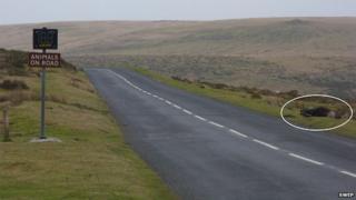 Dead pony on Dartmoor (SWEP)