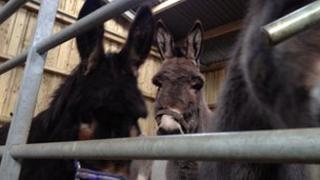 Donkeys at the sanctuary