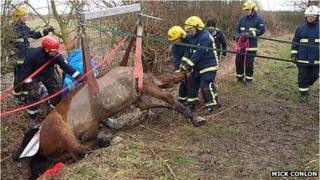 Horse being rescued by Northamptonshire fire fighters