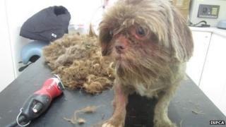 This little dog, called Scarlet, got a bit of a hair cut after the raid