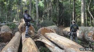 Members of the environmental police force inspect logs in Brazil's Para state in January 2013