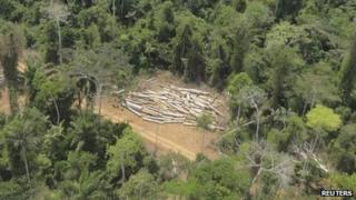 Rainforest - logging