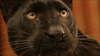 Panther. Pic: BBC/Monarch of the Glen