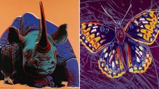 Black rhinoceros and San Francisco silverspot