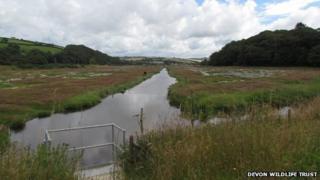 South Efford Marsh