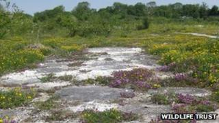 Wild thyme at Cherry Hinton Chalk Pits Nature Reserve