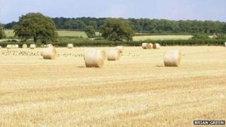 Field near Corby Glen