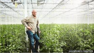 Houweling's Tomatoes greenhouses