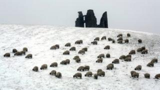 Sheep in the Borders, mid-March