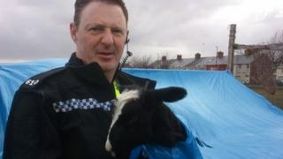 PC Graeme Simpson and Lucky the lamb