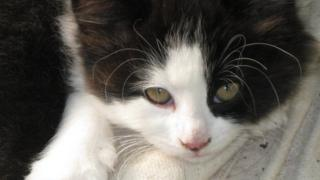 A black and white cat purring and being held by a person