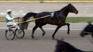 Driver Giuseppe Pietro Masio on horse Hodvig Lavec
