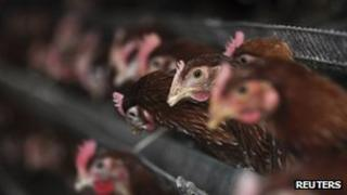 Chickens are seen at a hennery in Beifan village of Zouping county, Shandong province, 1 April 2013