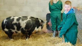Children cleaning out pigs