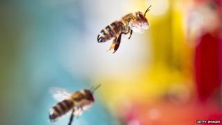 German bees