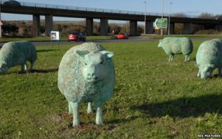 Sheep on Shoreham roundabout