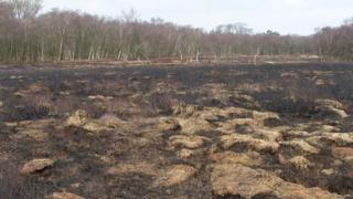 Fire damage at Heysham Moss