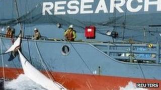 Japan's whaling ship Yushin Maru tows a whale in the Southern Ocean (17 Feb 2013)