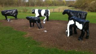 Milton Keynes cows being repainted