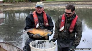 Fish removed from Tunstall Lake