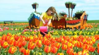 Girl waters tulips