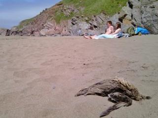 Tregonhawke beach at Whitsand Bay