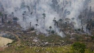 Rain forest being burned down for cattle in Brazil