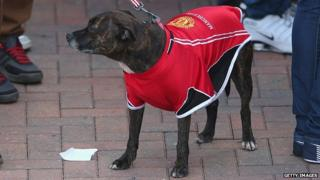 Dog in a Manchester United shirt in Albert Square