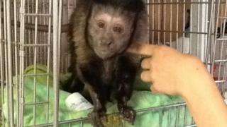 Wendell the monkey