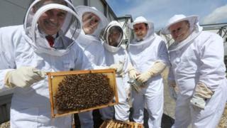 Princesshay Bee project