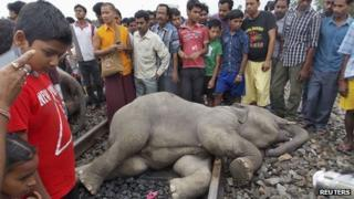 Elephant hit by train, 30 May