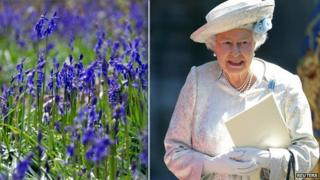 bluebells and The Queen
