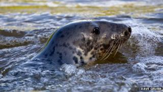 The seal photographed on Tuesday