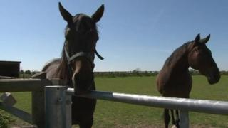 Horses at Bransby Home of Rest for Horses,