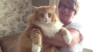 Ulric the cat and owner Jan Mitchell