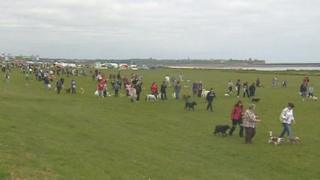 The Great North Dog Walk