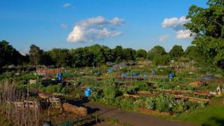 Walsall Road Allotments by Betty Farruggia