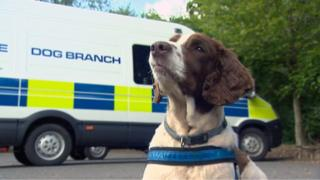 Sam the retired police sniffer dog