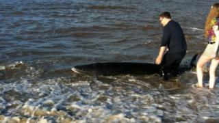 Kevin Trent and daughter Jordan helping to get whale out to sea
