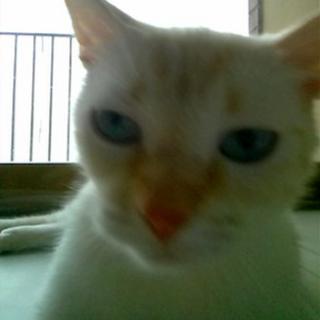 Cat picture taken using Snapcat