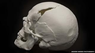 The new reconstruction of the skull from the side