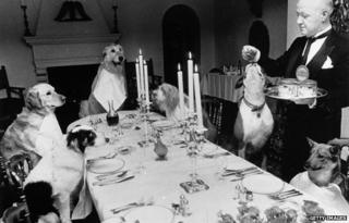 Canine banquet