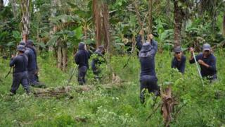 Men destroy coca plants in the southern Colombian province of Tumaco in November 2010