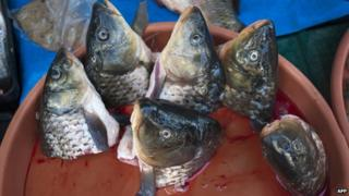 Carp heads in a pot