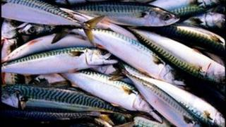 HMRC probe fishing industry