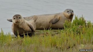 Seal pups at Greatham Creek