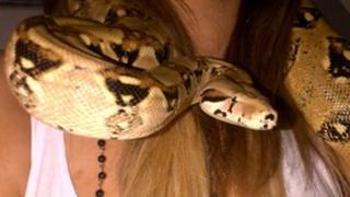 Petsi the snake