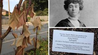 Composite image of the memorial tree and suffragette Emily Davison